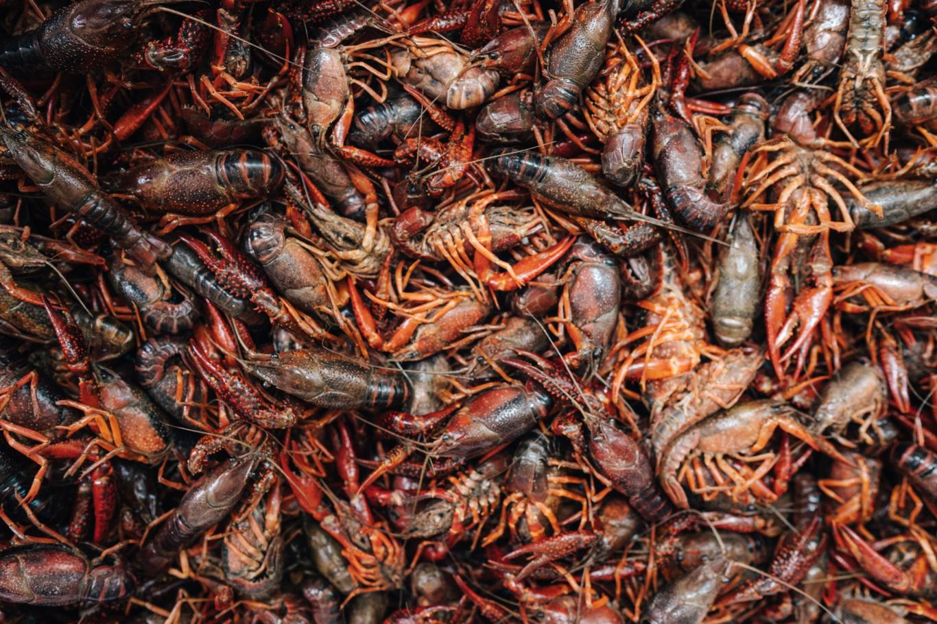 Crawfish in the spring.jpeg